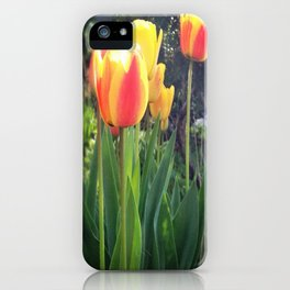 Spring Tulips in Bloom iPhone Case