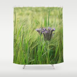 phacelia in a barley field Shower Curtain