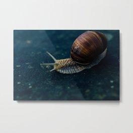 Blue Snail Metal Print