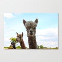 alpaca Canvas Prints featuring Alpaca by SC Photography