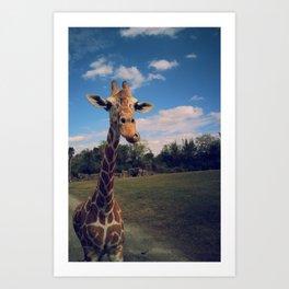 Giraffe safari Art Print