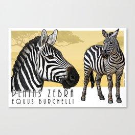Plains Zebra Canvas Print