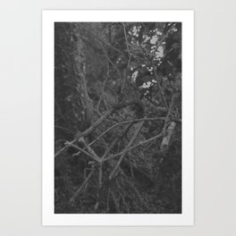Dark and scary forest Art Print
