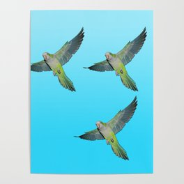 Flying parakeets Poster
