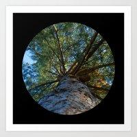 Trees from below 6 Art Print