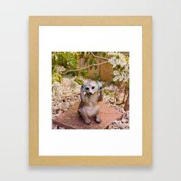 Meerkat.. Framed Art Print