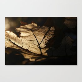 the life of a leaf Canvas Print