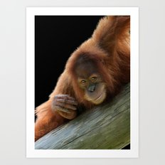 Smiling Young Orangutan Art Print