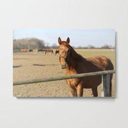 Pferde Metal Print