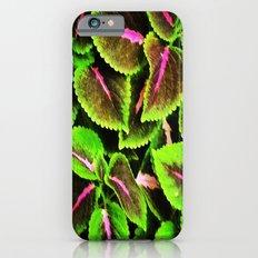 Coleus Slim Case iPhone 6s