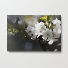 Cherryblossom and the Visitor Metal Print