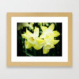 Daffodil family Framed Art Print
