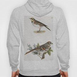 165 Horned Lark (Alauda cornuta) 166 Fox-colored Sparrow (Fringilla iliaca)  from Zoology of New Yor Hoody