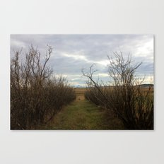 pathways (one) Canvas Print