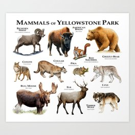 Mammals of Yellowstone Park Art Print