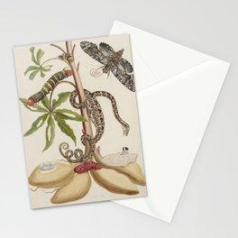 Cassava - 1765 Maria Sibylla Merian Stationery Cards