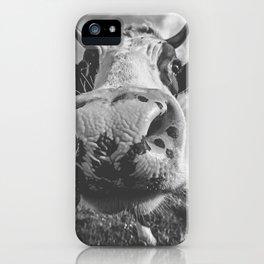 Inquisitive Cow iPhone Case