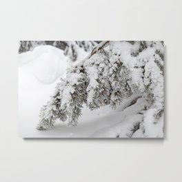 Winter's Pine 4 Metal Print