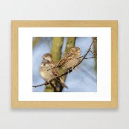 Female  Sparrow Framed Art Print
