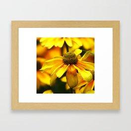 Sunflower Sunny Day Framed Art Print