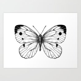 Cabbage butterfly Art Print