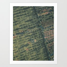 Aerial photography, italian landscape, drone photo, olive trees, Puglia, Apulia Art Print