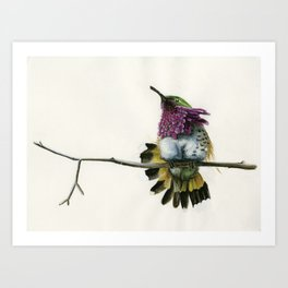 Hummingbird on a branch Art Print