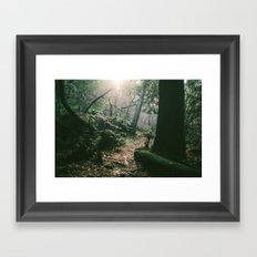 ORCAS ISLAND FOREST Framed Art Print