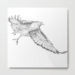 Red Tail Hawk in Flight Metal Print