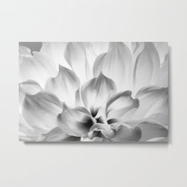 Dahlia in black and white Metal Print