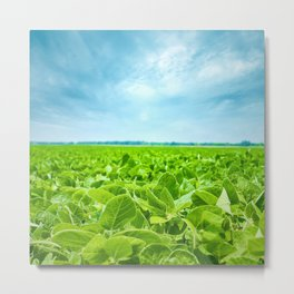 Image of green grass field and bright blue sky Metal Print