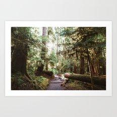 Sunshine on a Forest Trail Art Print