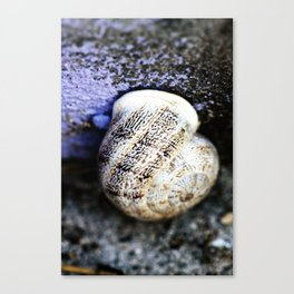 Snail Canvas Print