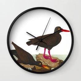 White-legged Oyster-catcher, or Slender-billed Oyster-catcher Bird Wall Clock