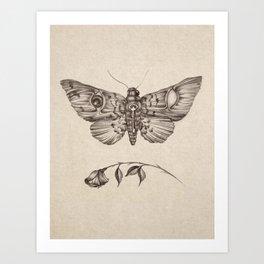 ButterfyEyes Art Print
