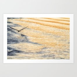 Black Skimmer Skimming Art Print
