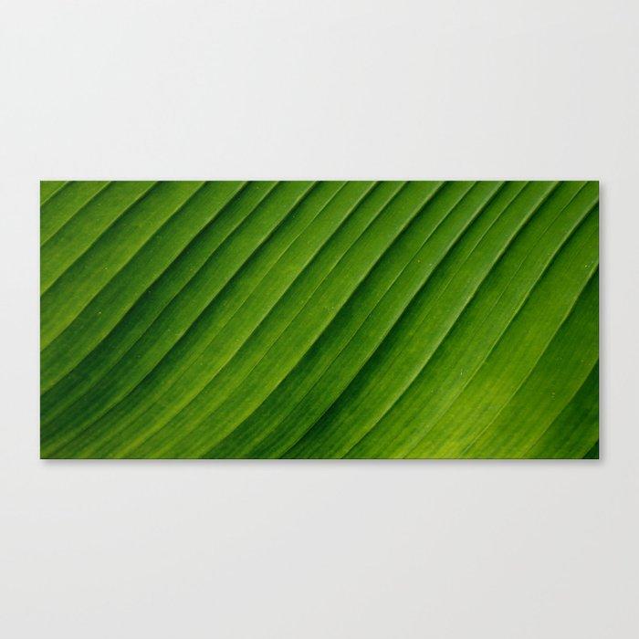 Natural Curves Canvas Print