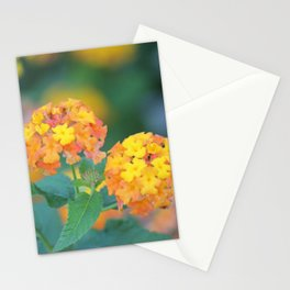 Pretty Sweet Floral Orange And Yellow Blossoms Stationery Cards