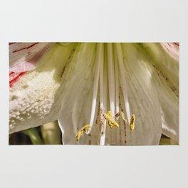 Beautiful amaryllis hippeastrum closeup Rug