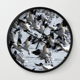 Oie des neiges - Snow Goose - ganso blanco Wall Clock