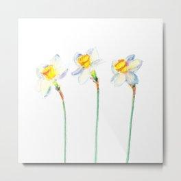 Cheers - Daffodils  Metal Print