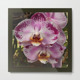 Pink Orchid Blossom from Mexico Metal Print