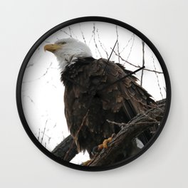 Looking up to a Bald Eagle Wall Clock