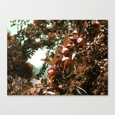 Apple Season  Canvas Print