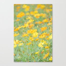 Small yellow flower Canvas Print