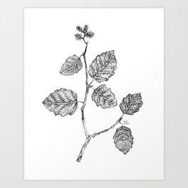 Gray alder Art Print