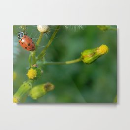 Lady Bug Dandelion Metal Print