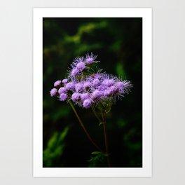 Pokey Purple Art Print
