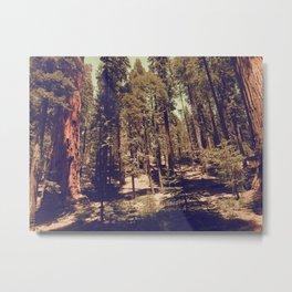 Off Trail Metal Print