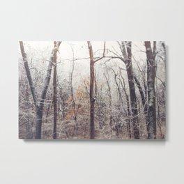 Winter Woods #2 Metal Print